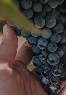 Viticulture & OEnologie